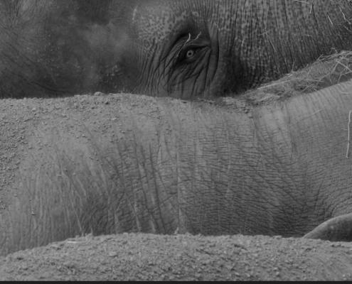 Touching Elephant